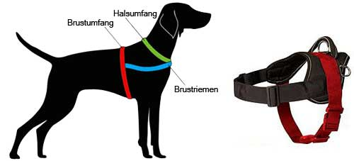 How to Measure the Dog for the Harness H6