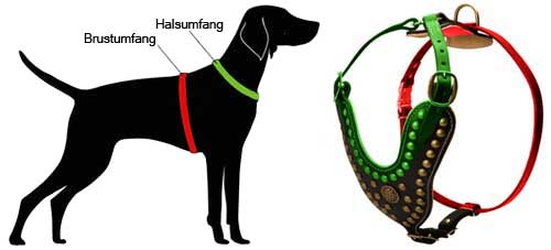 harness with studs for labrador