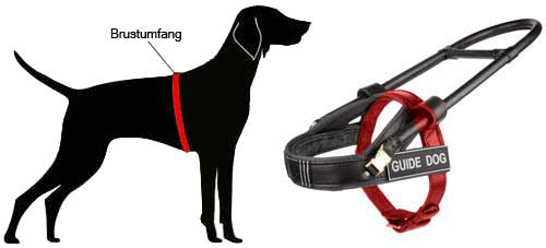 Guide Harness for Labrador