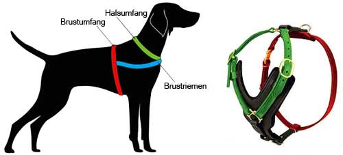 How to Measure the Dog for the Harness H108