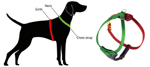 how to measure labrador for the harness