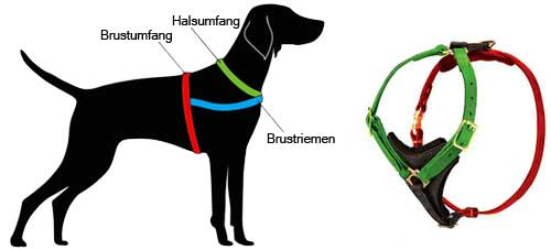 How to measure the dog for the harness H3