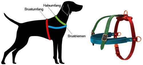 How to Measure the Dog for the Harness H5