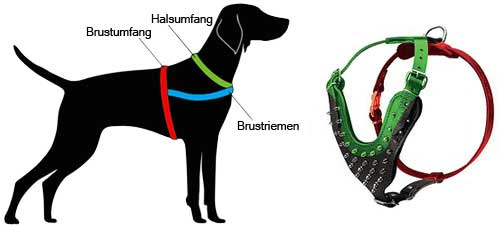 How to Measure the Dog for the Harness H9