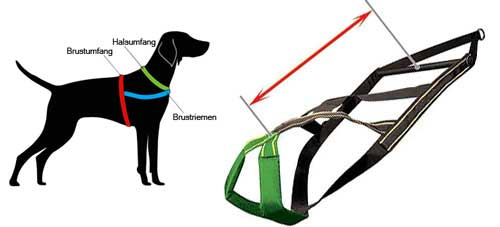 pulling harness for labrador