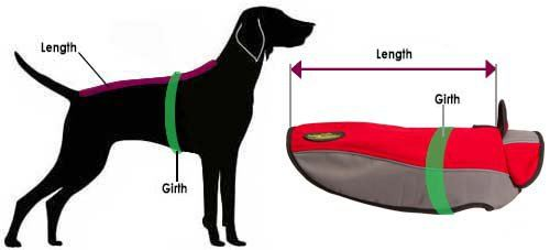 labrador coat harness