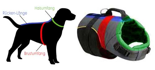 dog harness as vest for labrador