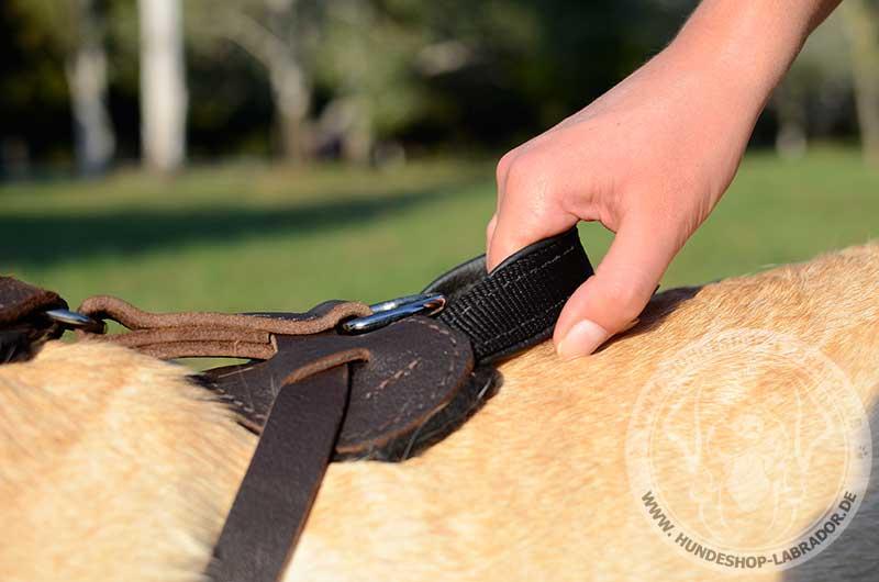 Hundegeschirr Leder praktisch fur Labrador