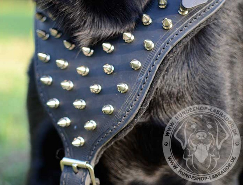 Hundegeschirr Leder mit  Schmuck