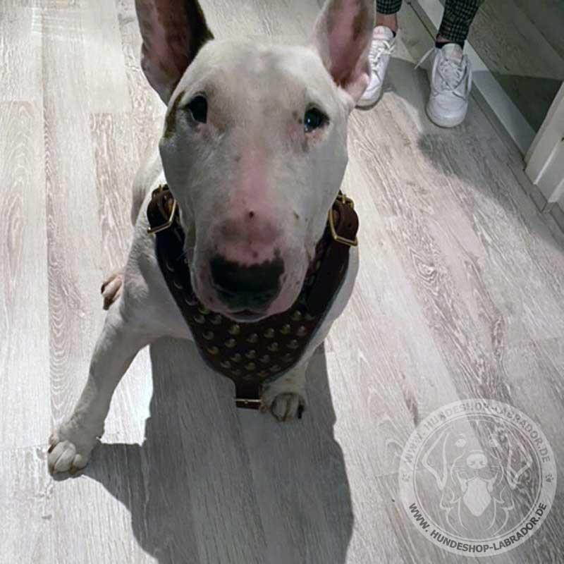 Hundegeschirr Leder weich gepolstert am Hund