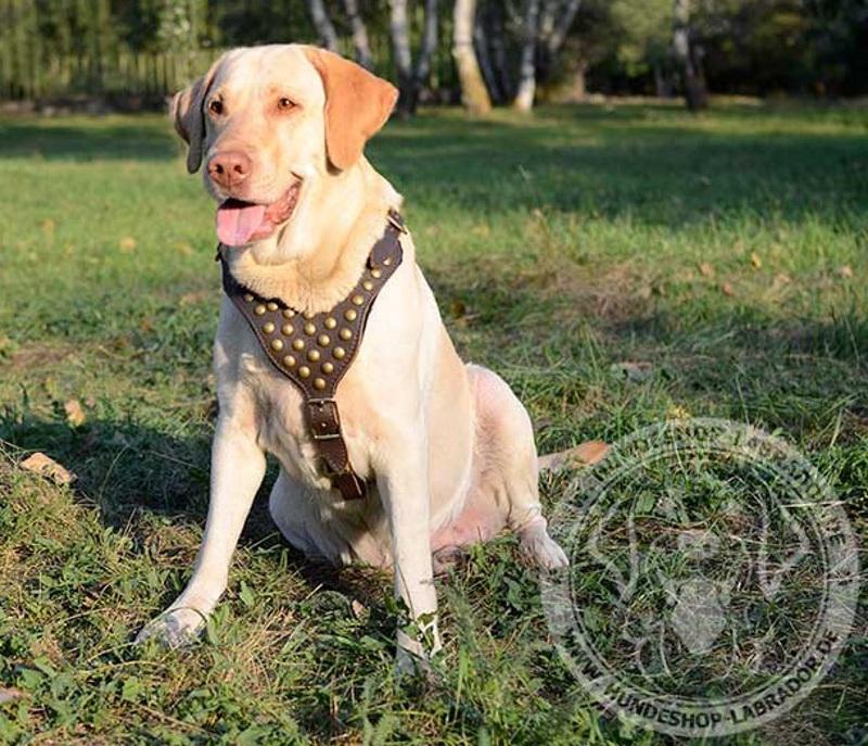 Hundegeschirr mit Messing Zubehoer