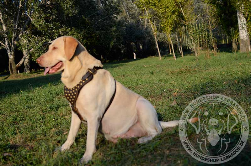 Hundegeschirr aus ideal bearbeitetem Leder