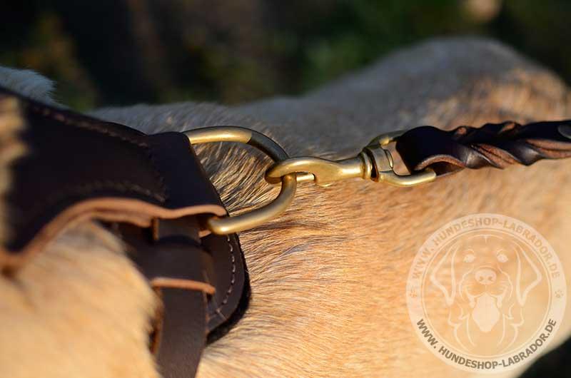 Hundegeschirr mit goldenfarbigen Nieten