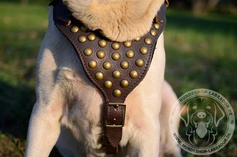 Hundegeschirr Leder exklusiv
