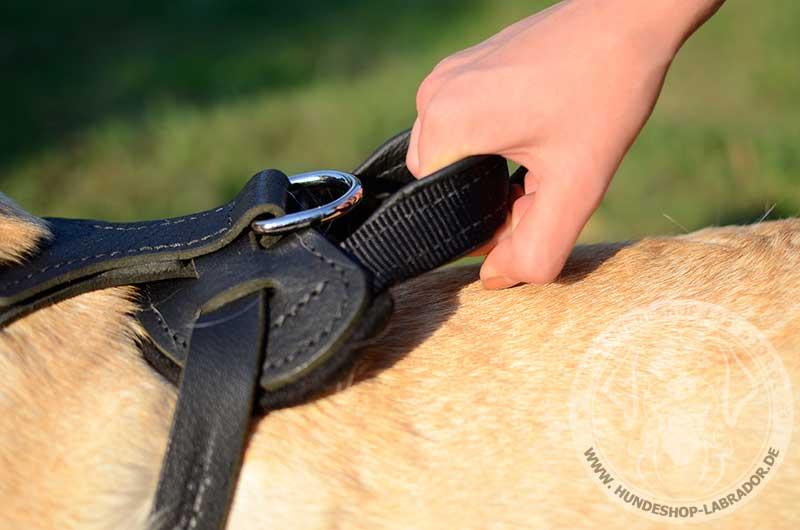 Hundegeschirr Leder mit Handschlaufe ergaenzt
