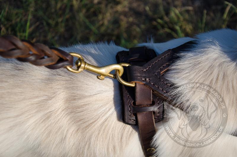 Hundegeschirr Leder  mit brusplatte gepolstert