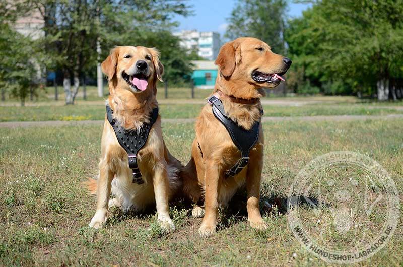 Hundegeschirre aus Leder an Hunden