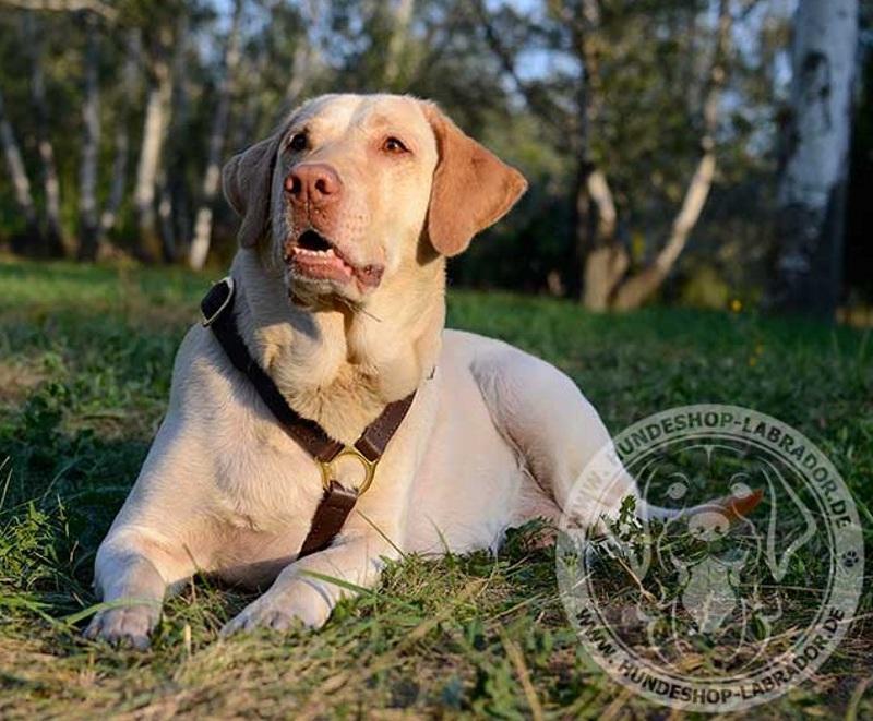 Hundegeschirr fuer jeden Tag