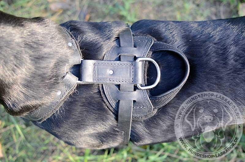 Labrador estklassiges Brustgeschirr
