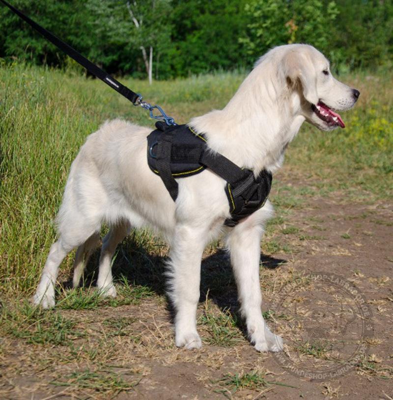 Hundegeschirr fuer Sport und Alltag