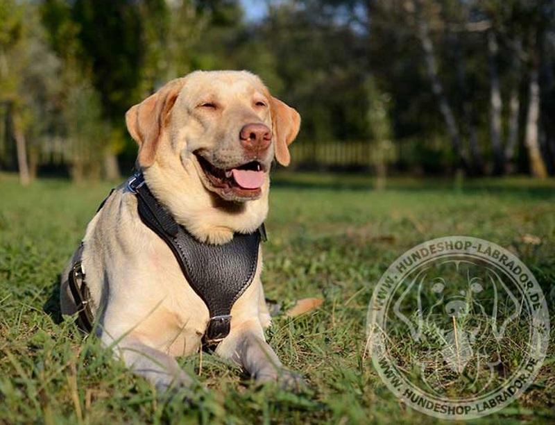 Hundegeschirr Leder mit fester Handschlaufe