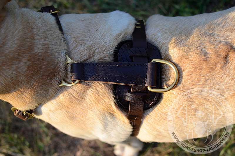 Hundegeschirr Leder super Qualiaet