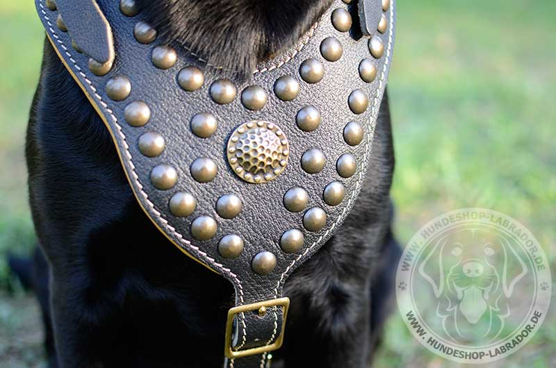 Hundegeschirr aus echtem leder stilvoll