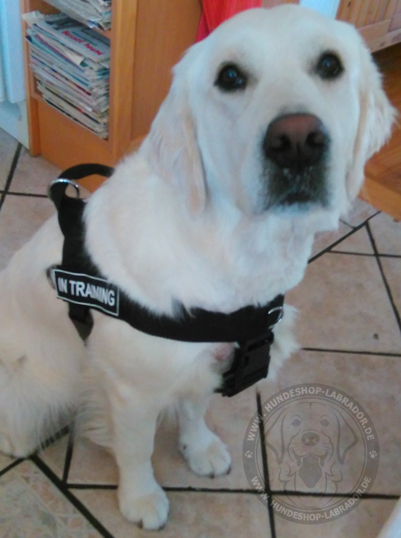Labrador Geschirr, Retriever Hundegeschirr
