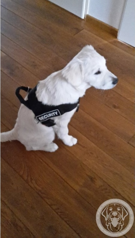 Hundegeschirr Leder mit Handschlaufe fur Labrador