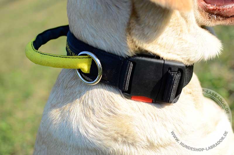 Hundehalsband Nylon fuer Labrador