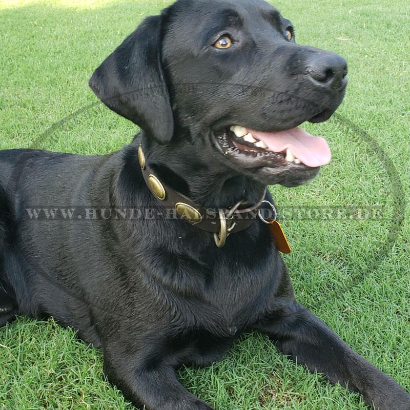 Hundehalsband mit ovalen Platten  fuer Labrador