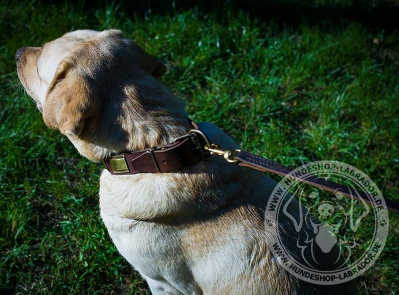 Hundehalsband perfekt fuer Labrador