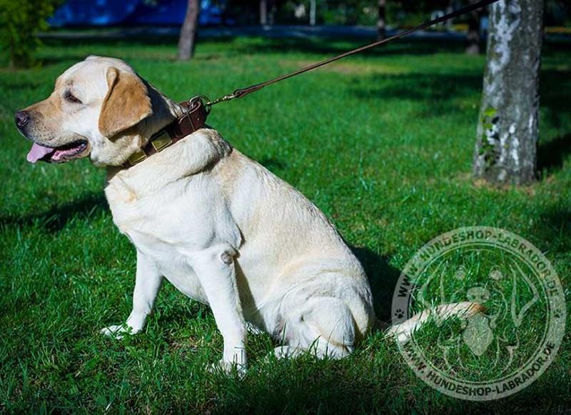 Hundehalsband 40 mm fuer Labrador