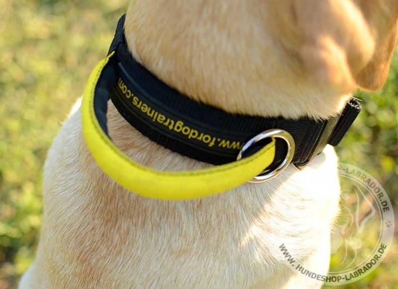 Hundehalsband mehrzweckig fuer Labrador