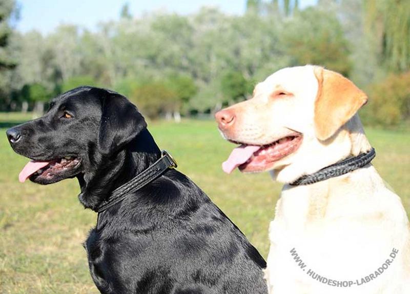 Labrador Halsband mit Flechten