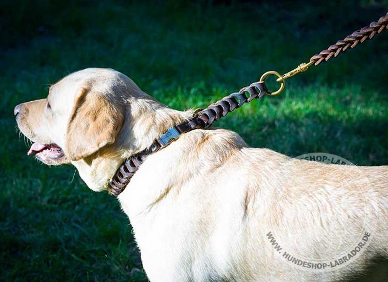 Hundehalsband fest und haltbar
