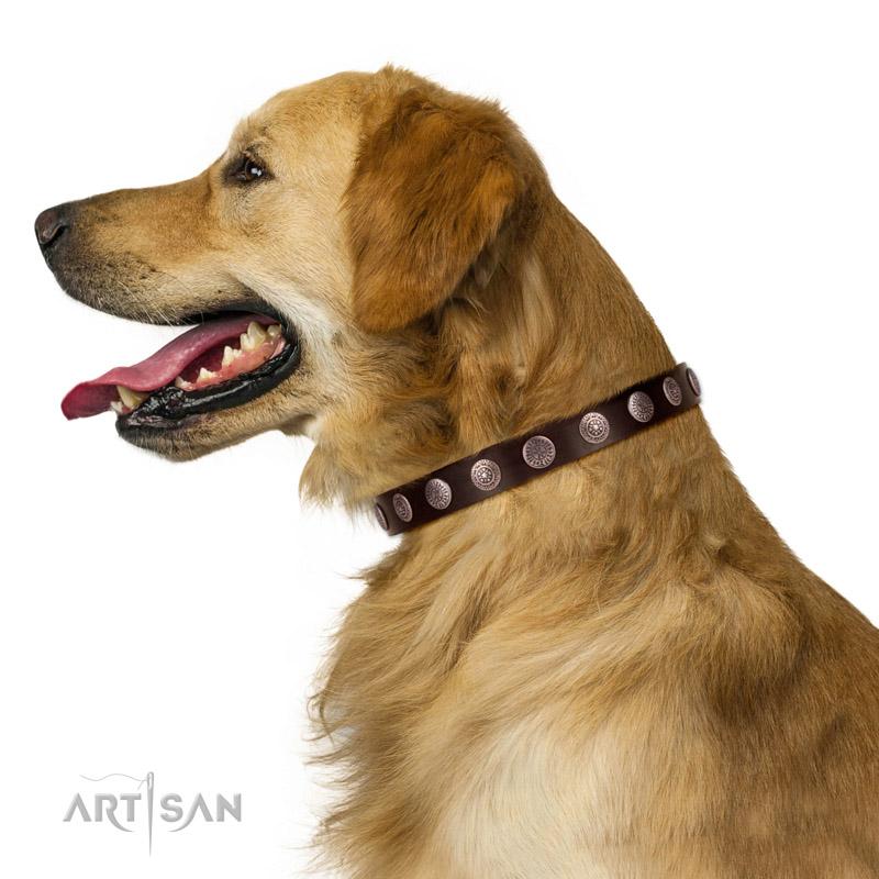 Hundehalsband silberfarbene Platten   am Hund