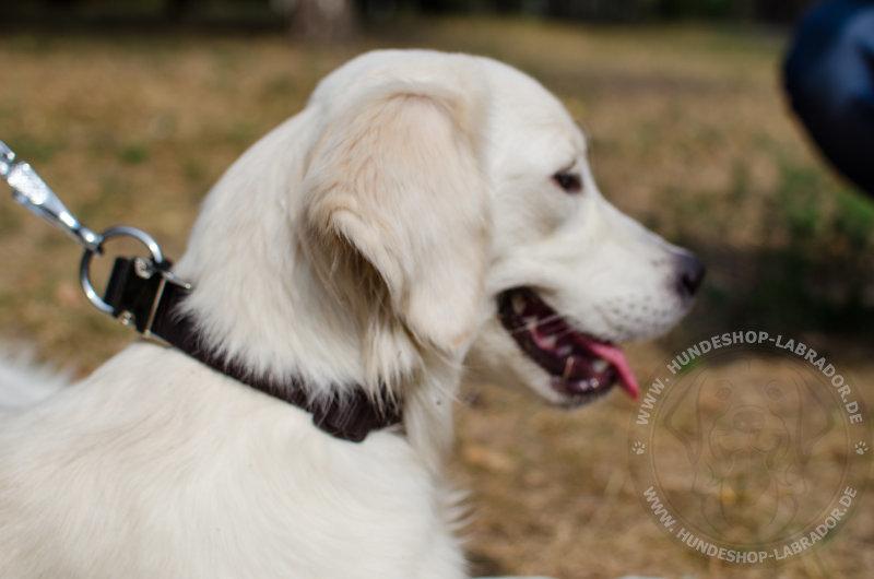 Hundehalsband praktisch fuer Labrador