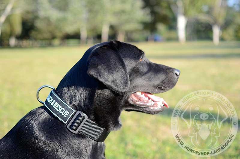 k9 Labrador Halsbandr