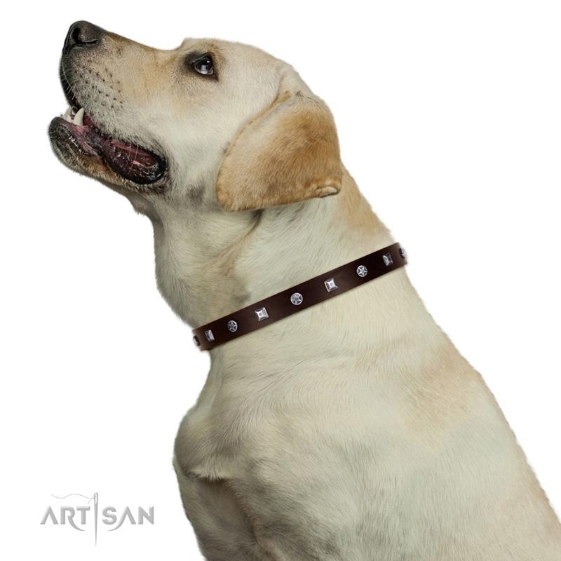 Hundehalsband mit Sterne und quadratischen Nieten