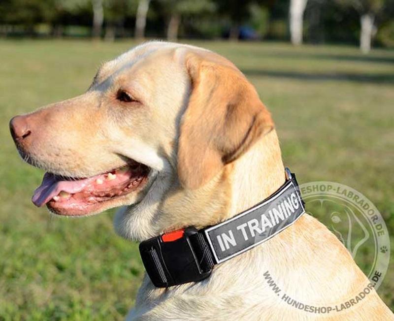 Logo Halsband fuer Labrador Training