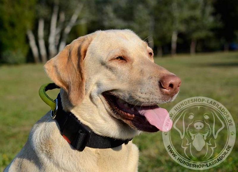 Hundehalsband super fest fuer Labrador