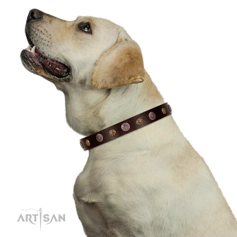Hundehalsband Platten   Design am Hund