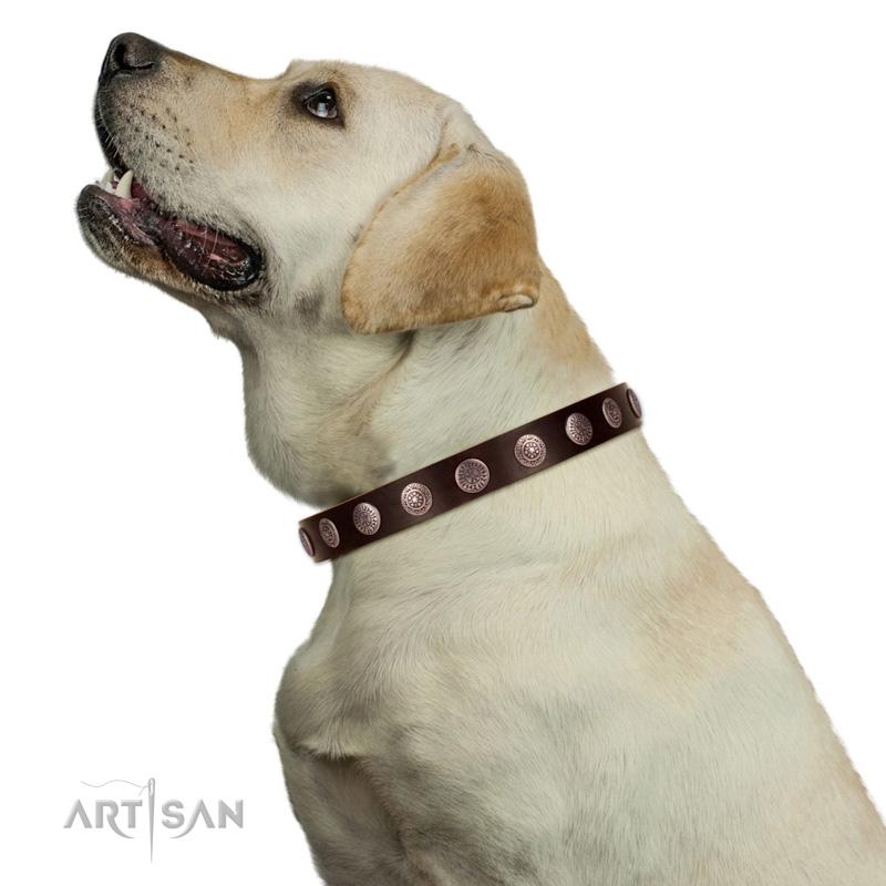 Hundehalsband runde Platten silberfarbig