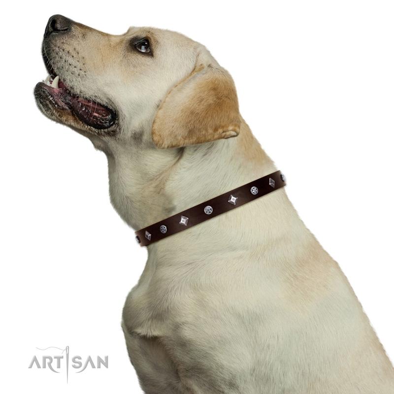 Hundehalsband mit Sterne und Rhomben Nieten