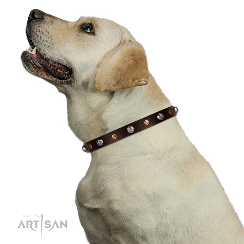 Hundehalsband in Braun am Hund