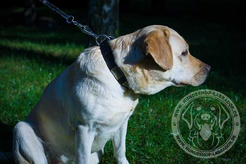Hundehalsbandmit Platten  fuer Labrador