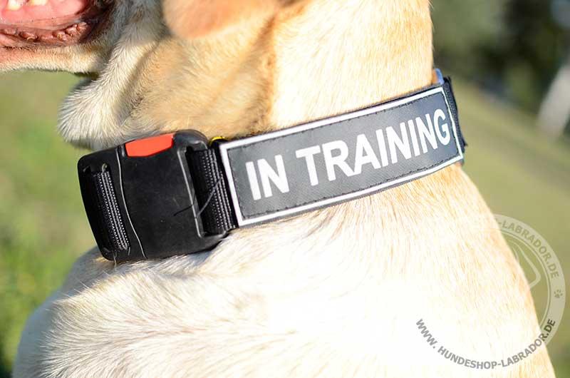 praktisches Halsband fuer Ihren Labrador