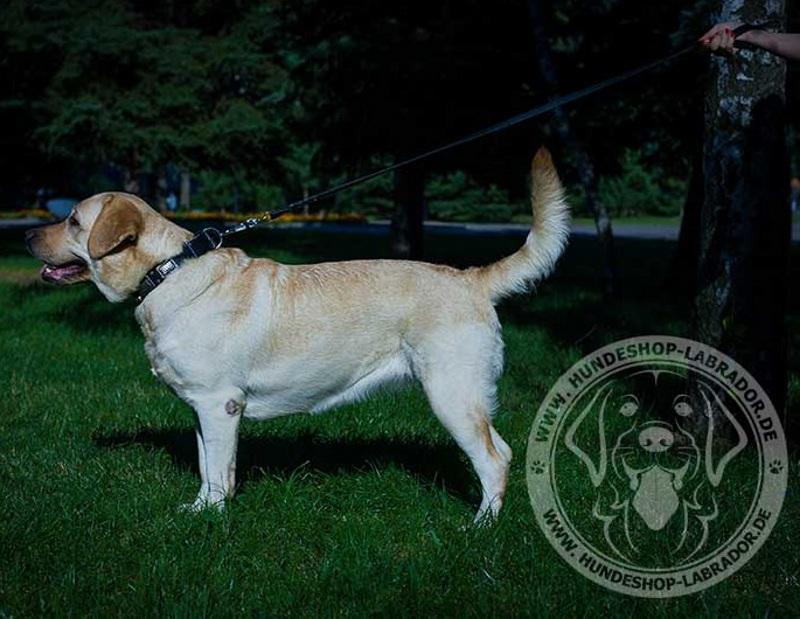 Hundehalsband ideal bearbeitet fuer Labrador