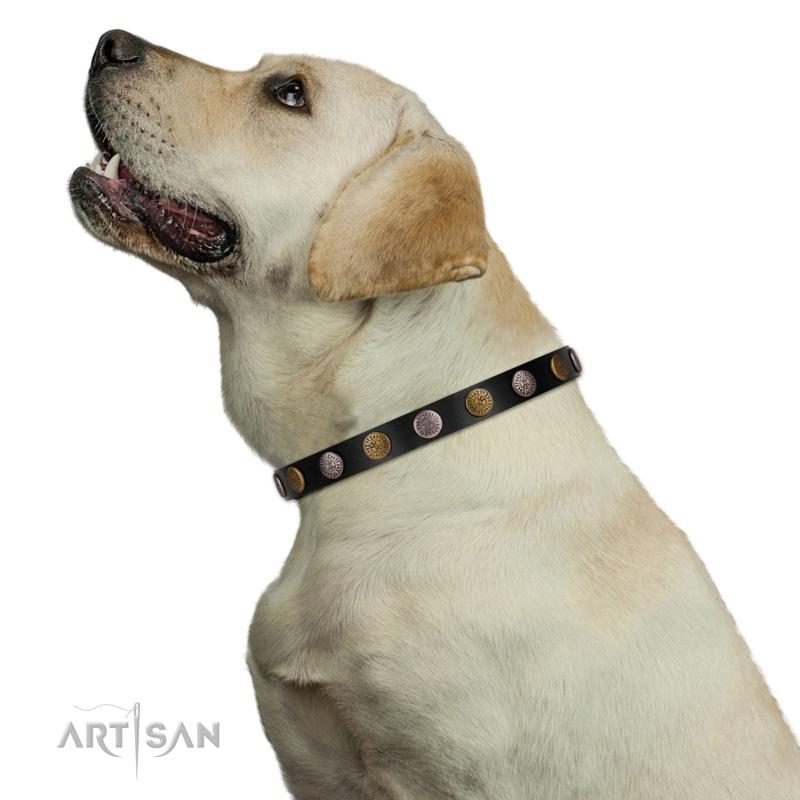 Hundehalsband mit gravierten Rundplatten am Hund